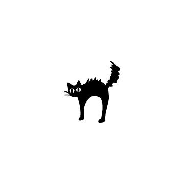 毛が逆立っている黒猫