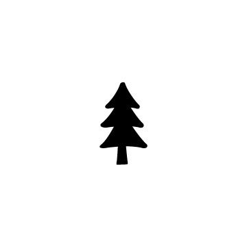 針葉樹のアイキャッチ用画像